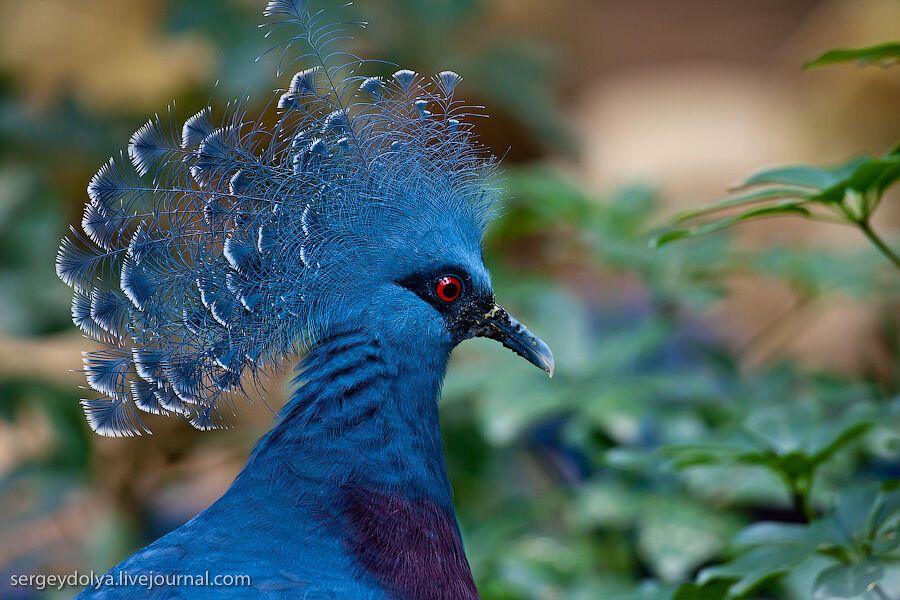 всех третьем название и картинки птиц самых красивых птиц пятницы появятся