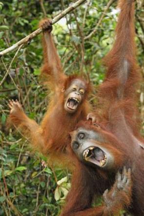 Эти веселые животные