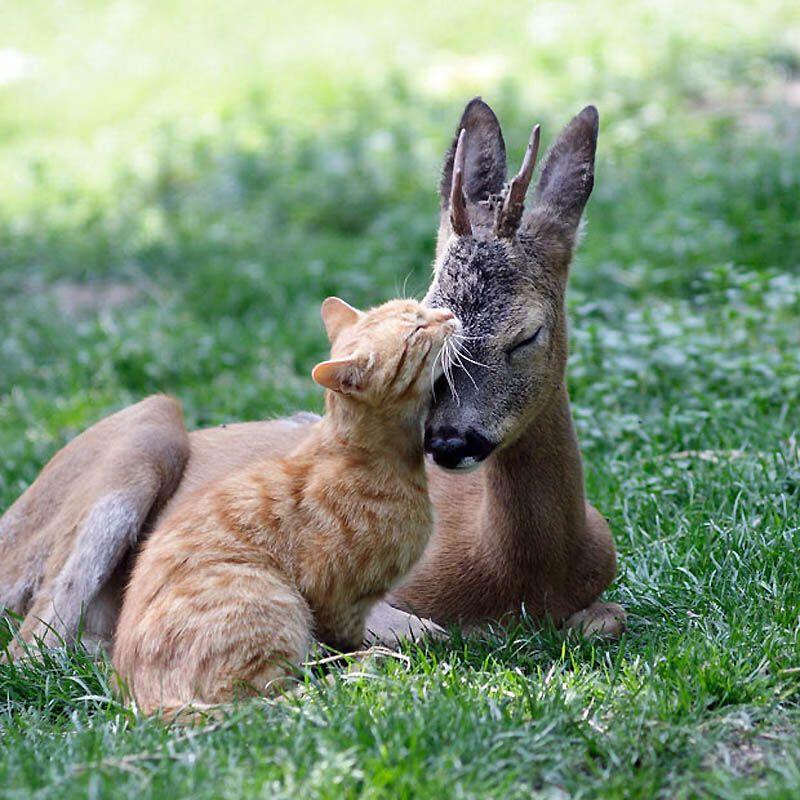 Ці милі тварини (Частина 2)