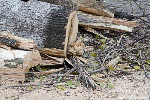 В Днепропетровске на двух женщин упало огромное дерево. Фото