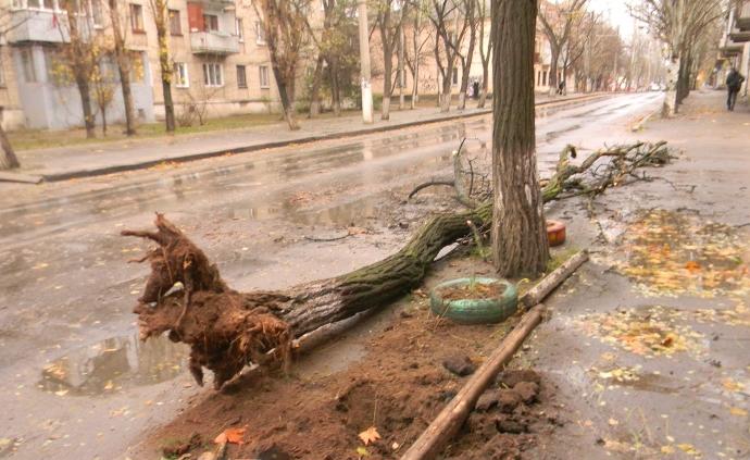 У Миколаєві буревій ламав дерева і зривав дахи, 3 грудня 2012