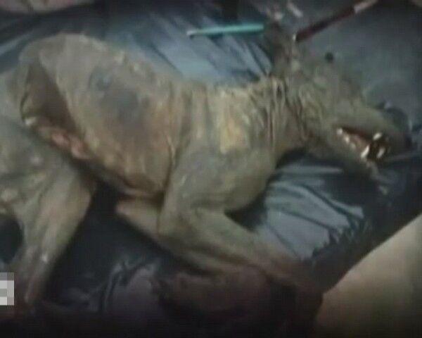 В Днепропетровске нашли чупакабру? Фото, видео
