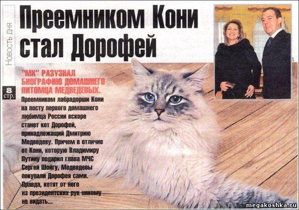 Медведев опроверг слухи о пропаже любимого кота. Фото