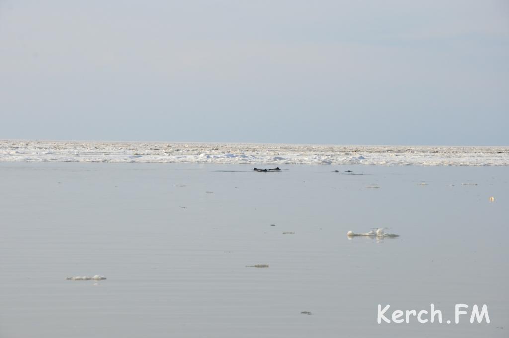 В Крыму около 100 дельфинов застряли в ледяном плену