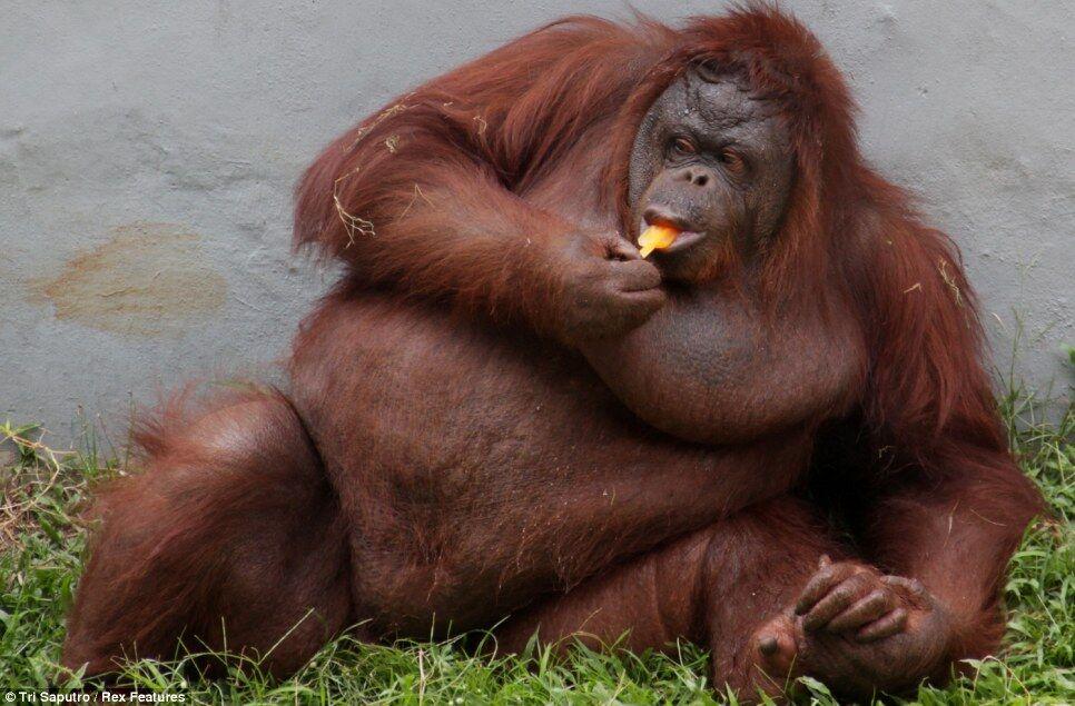 спасателям, самые толстые животные в мире фото торт кольцами