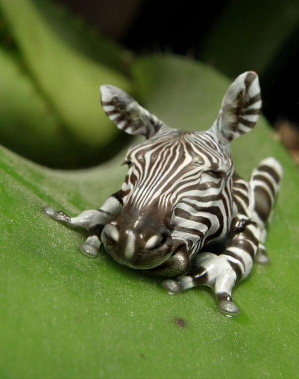 Комитет картинки, прикольные животные фотошоп