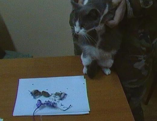 В Молдове задержали кота-наркокурьера
