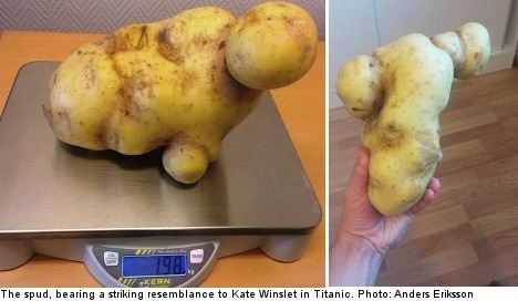 Знайдена картоплина, схожа на голу Кейт Уінслет