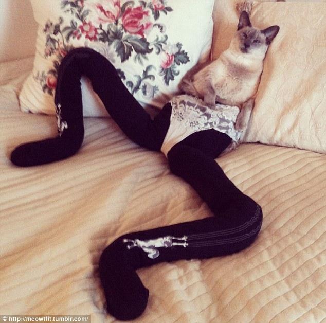 Интернет-сообщество увлеклось котами в колготках