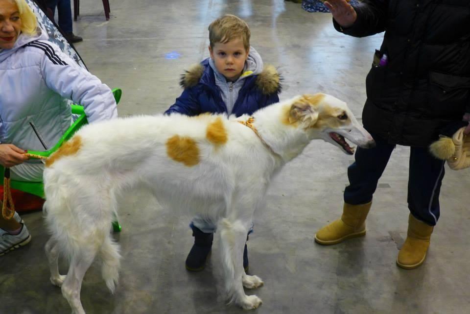 Нардеп Миримський зводив сім'ю на виставку собак