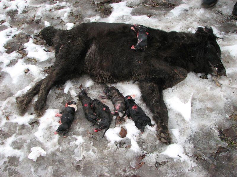 Возбуждено дело по факту убийства собак в Киеве