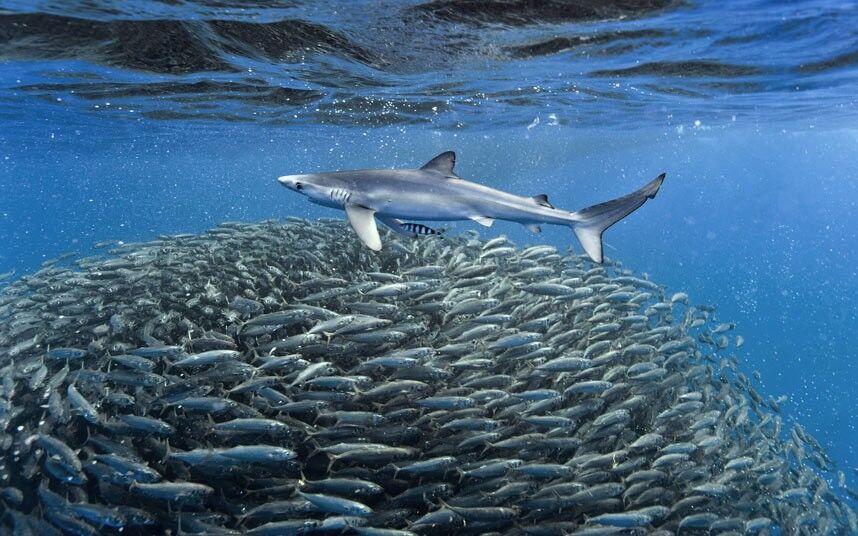 охота на акул фото черное