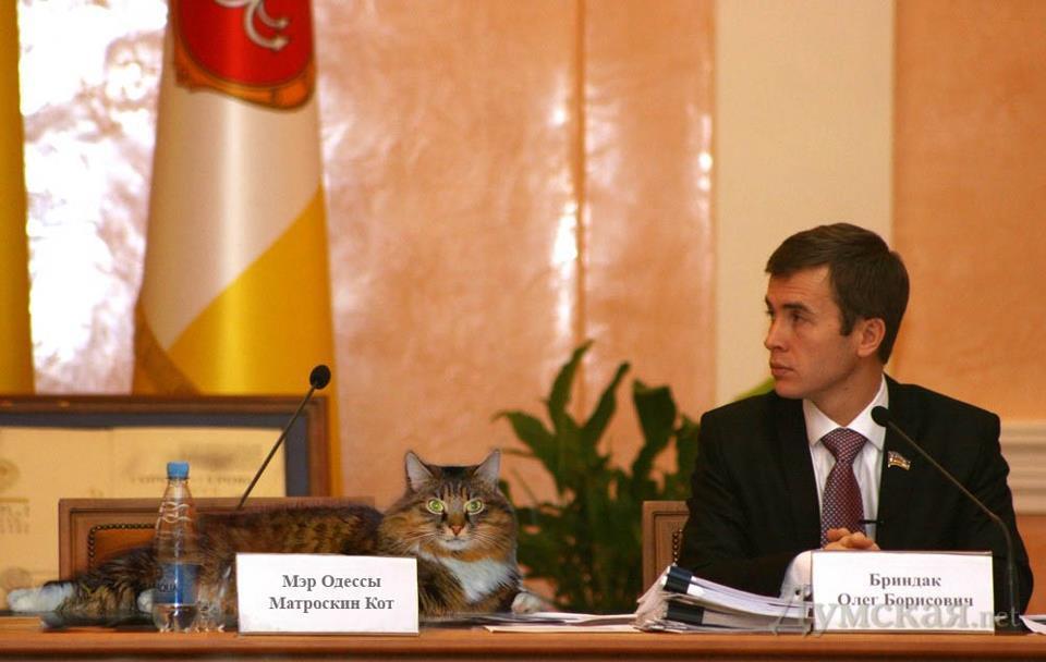 Кот мера Одеси користується Facebook і освоює фотошоп
