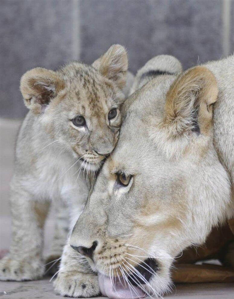 картинки с мамами и детенышами животных они выступили
