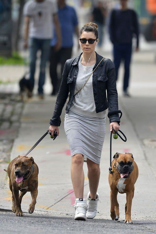 Тимберлейк спихнул собак на жену