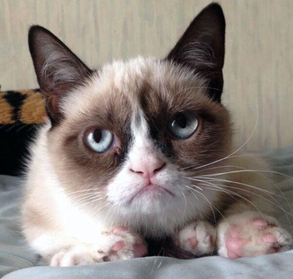 Grumpy Cat станет главным героем новой комедии