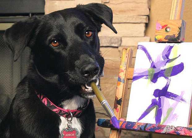 Пес пишет картины, чтобы помочь бездомным животным