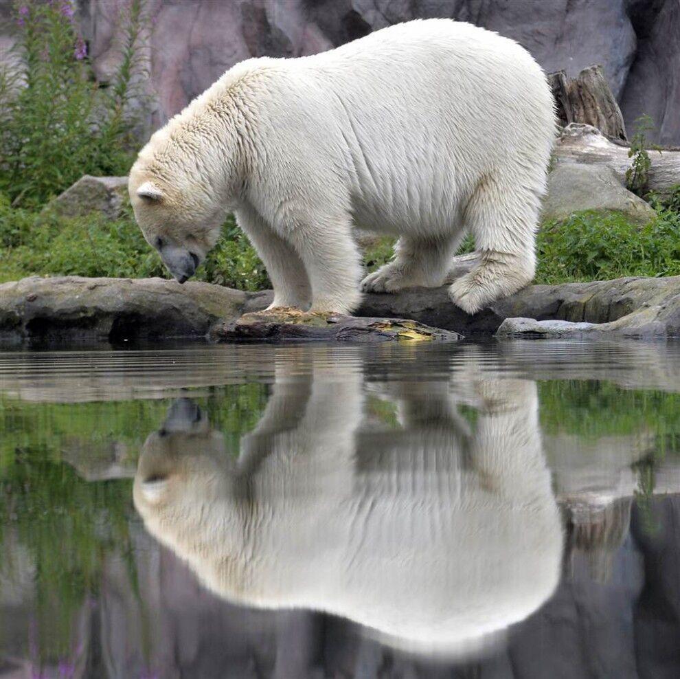 картинки всех животных картинки всех животных учесть, чтобы данная