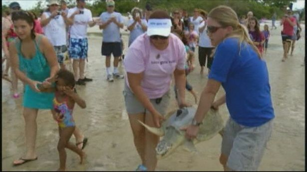 Енот украл у посетительницы пляжа розовый клатч