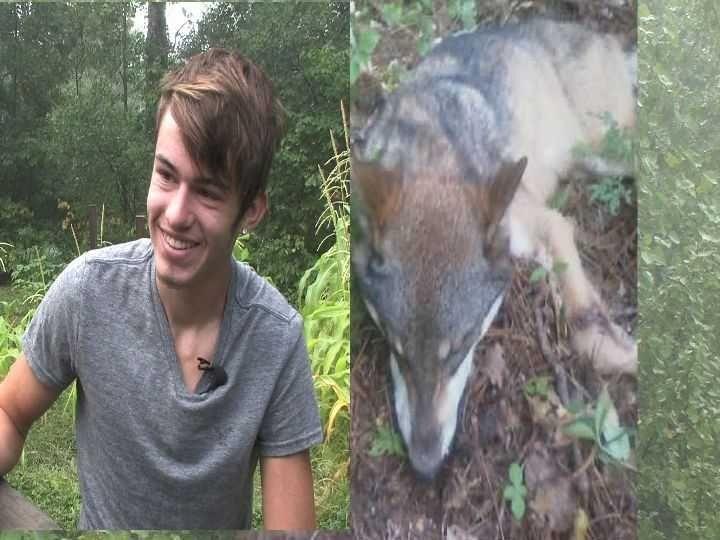 Волк пытался съесть голову 16-летнего парня, пока тот спал