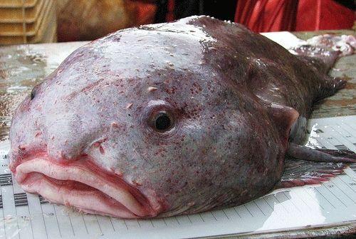 Названо самий потворне тварина на планеті