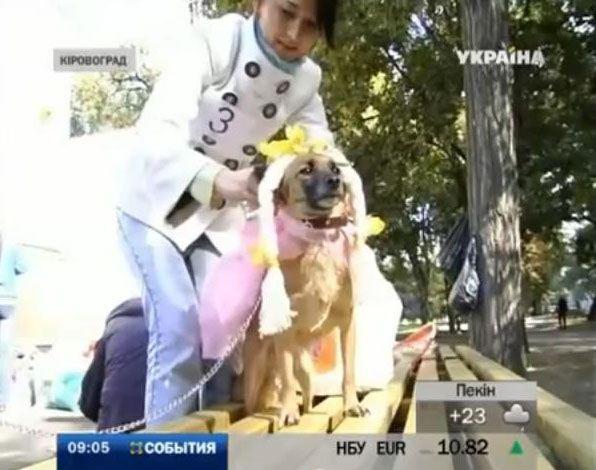 У Кіровограді обрали найкращого безпородного пса
