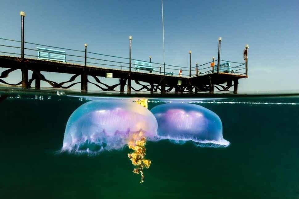 На грані двох світів. Дивовижні знімки під і над водою