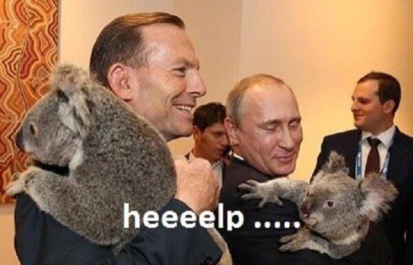 В сети высмеяли объятия Путина с коалой