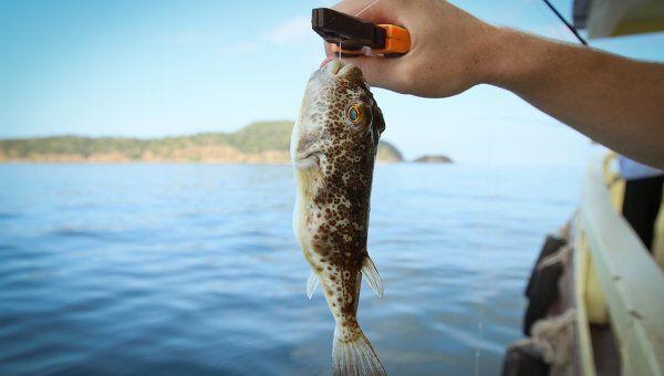 У Криму з моря вперше виловили загадкових отруйних риб: опубліковано фото
