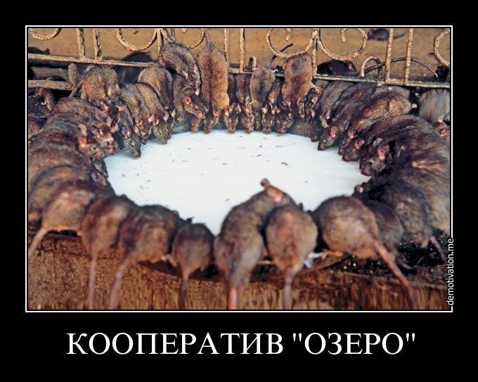 Тріумф молі (15 років путінізму в РФ)