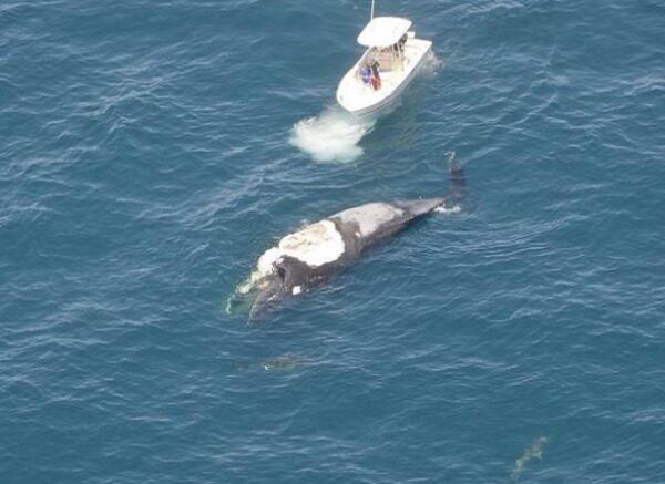 Мужчина оказался посреди океана на ките в окружении акул