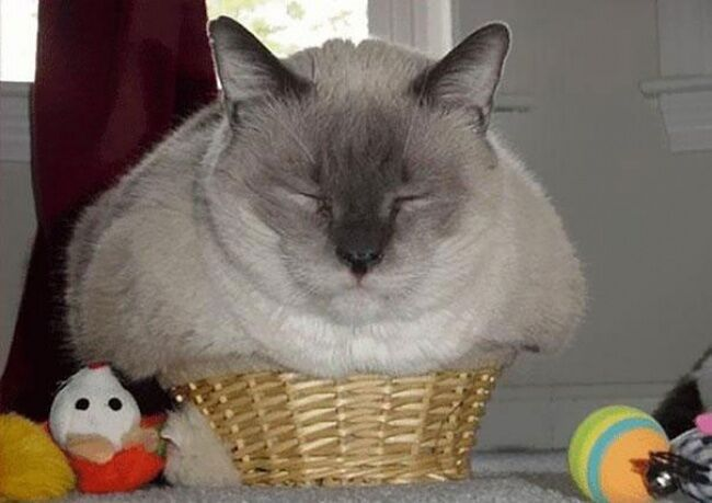 Cat lethargic but still eating