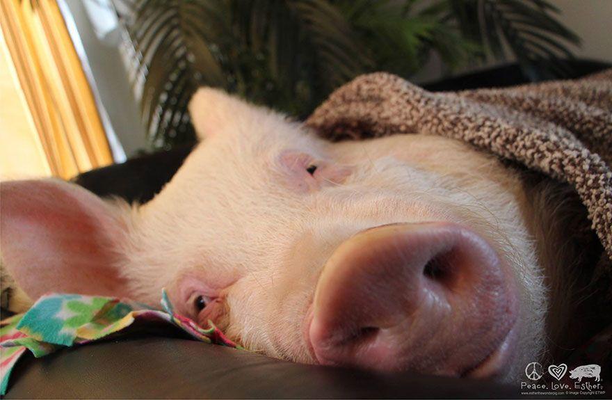 Смотреть смешные картинки сл спящими тремя поросятами, дня