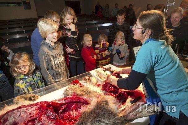 В Дании на глазах у детей расчленили волка