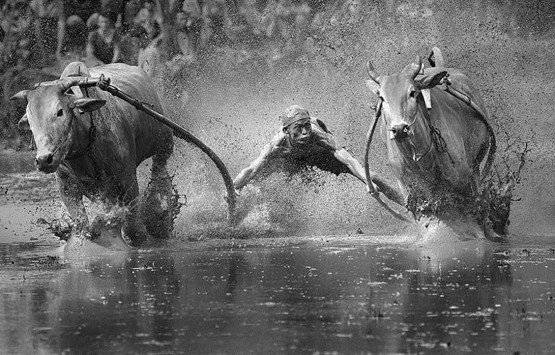 Финалисты фотоконкурса Sony World Photography Awards 2014