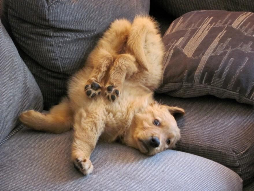 Собачья жизнь: Лучшие фото из Instagram