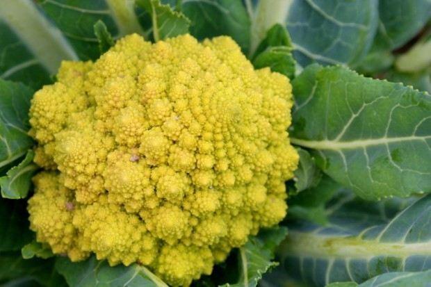 Назван самый красивый овощ в мире