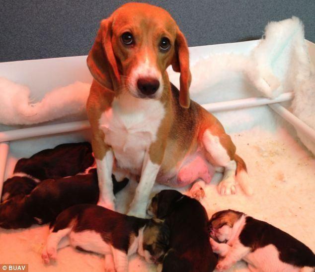 Опубликован видеоролик с ужасными экспериментами над животными (18+)