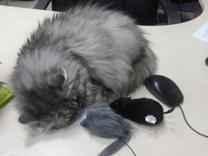 Кішка Бориса Ложкіна веде сторінку в Facebook