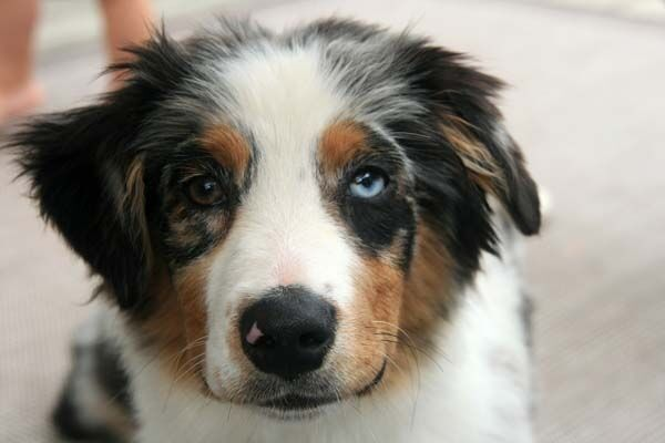 19 необычных собак с уникальным окрасом