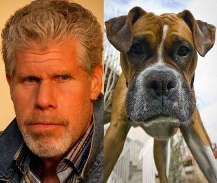 3 собаки, которые невероятно похожи на известных личностей