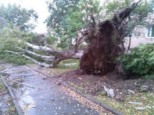На Ривненщине огромная воронка смерча снесла крыши домов и выкорчевала деревья