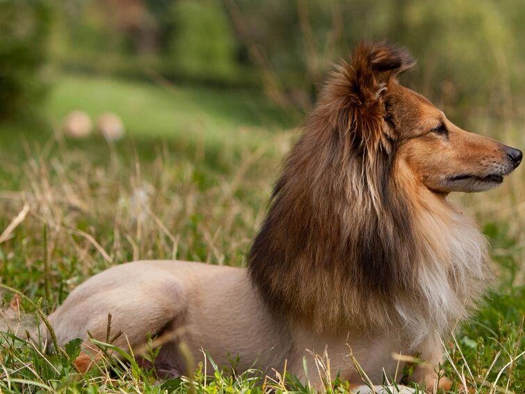 Собаки и кошки с самыми безумными стрижками