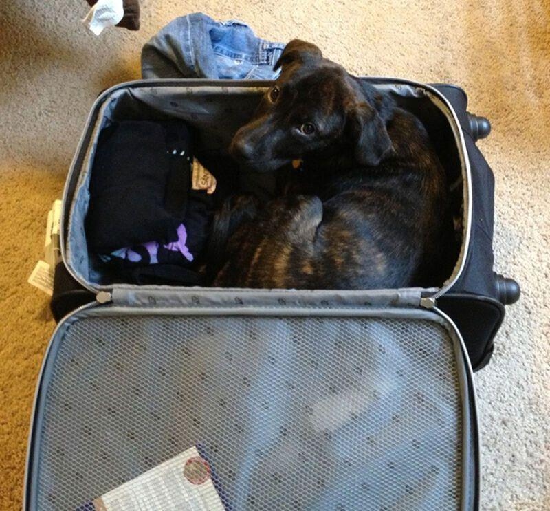 Смешные картинки с чемоданом и животными, картинки