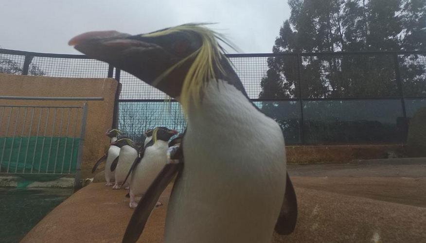 Зворушливі Селфі пінгвіна і коали викликали фурор в мережі