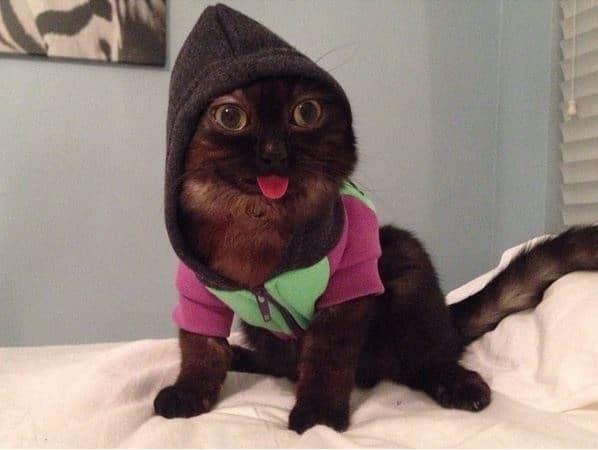 Чудной кот, показывающий язык, стал новой звездой интернета