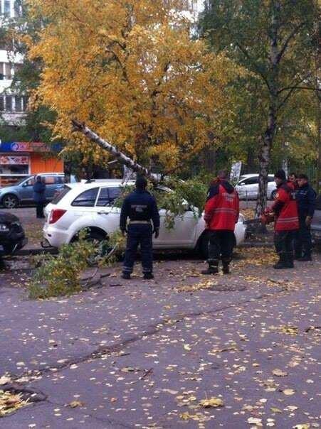 В Киеве упавшая береза разбила автомобиль