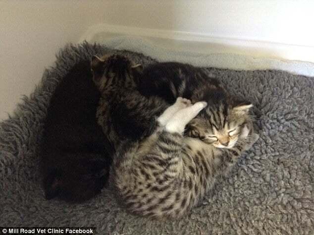 """Кішка """"атакувала"""" клініку, щоб врятувати своїх кошенят"""