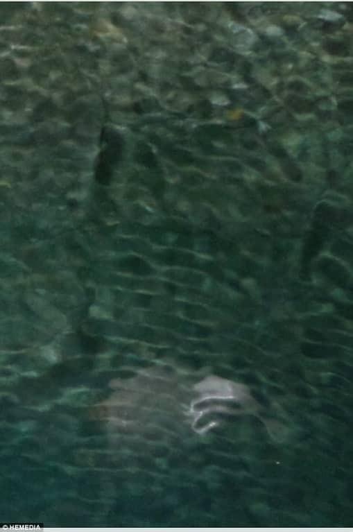 У берегов Греции нашли неведомое морское чудовище