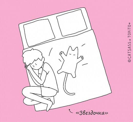 Как правильно спать с человеком: инструкция для кошек